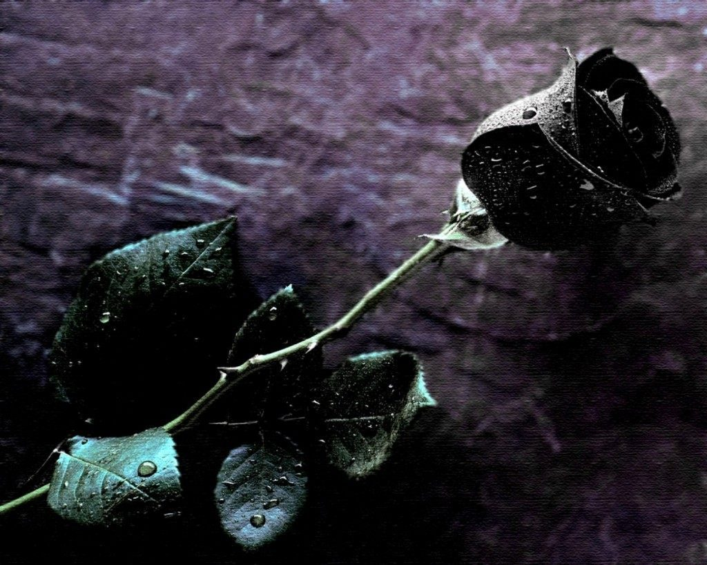 fondos de pantalla de rosas negras