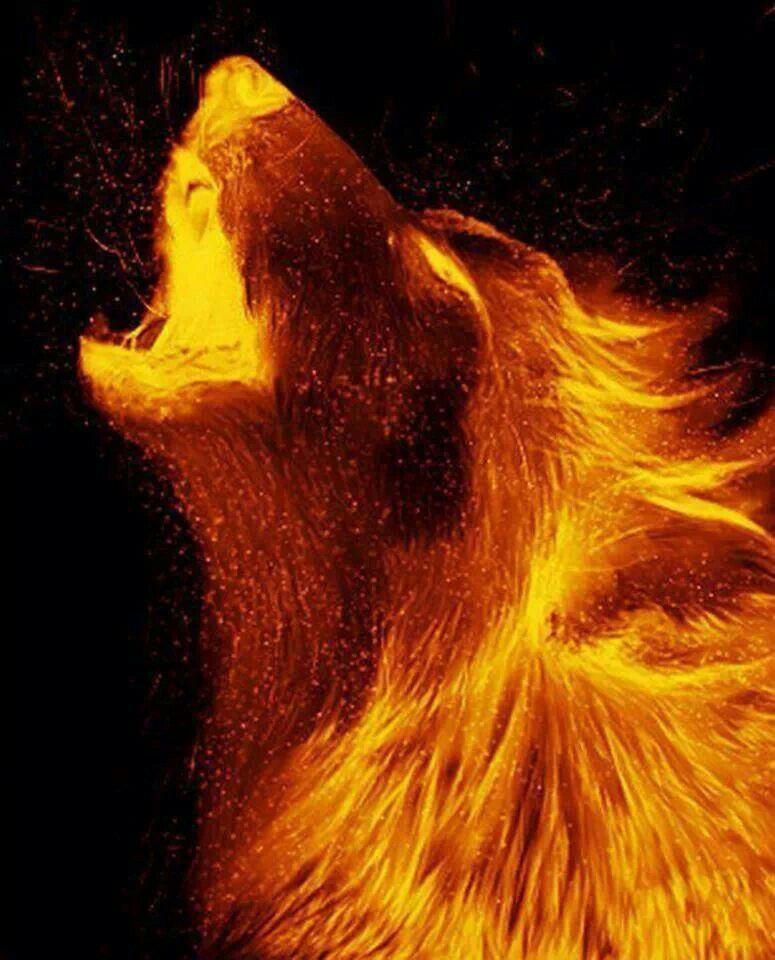 imagen de lobos de fuego