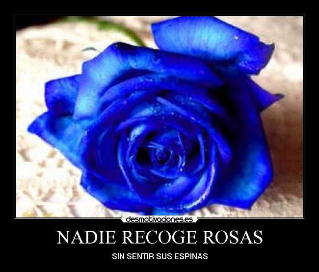 Frase romántica con rosas azules