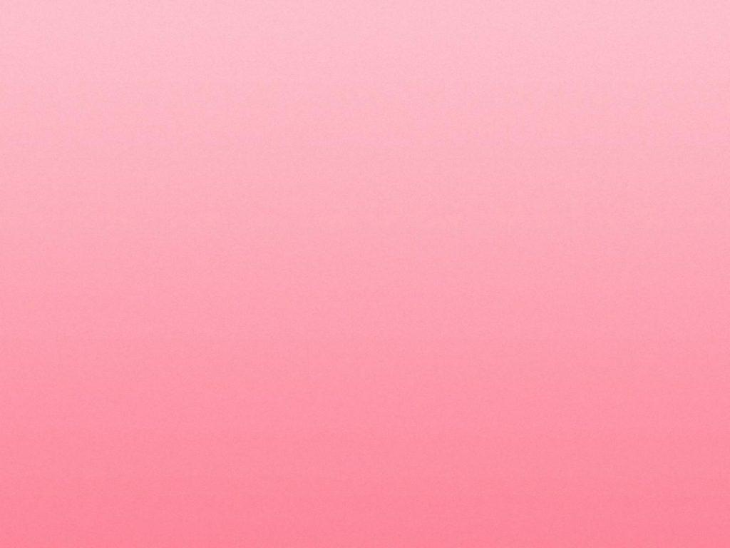 rose rosa wallpaper hd