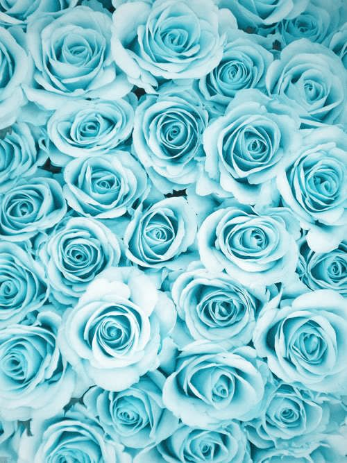 Wallpapers rosas azules