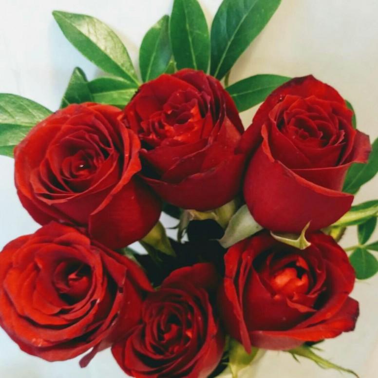 Fondo de rosas rojas