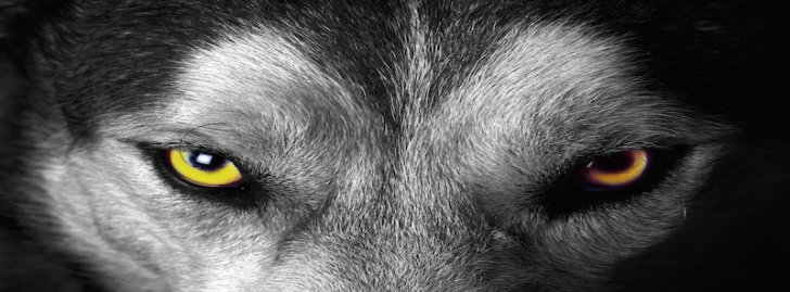 imagenes de lobos con frases para facebook