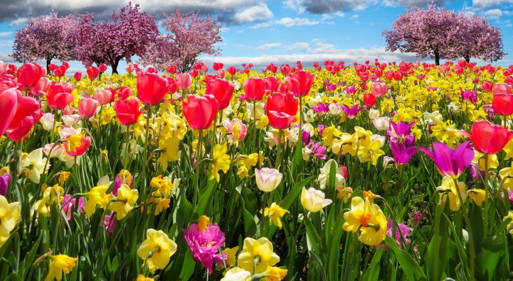 paisajes primaverales para fondo de pantalla para celulares