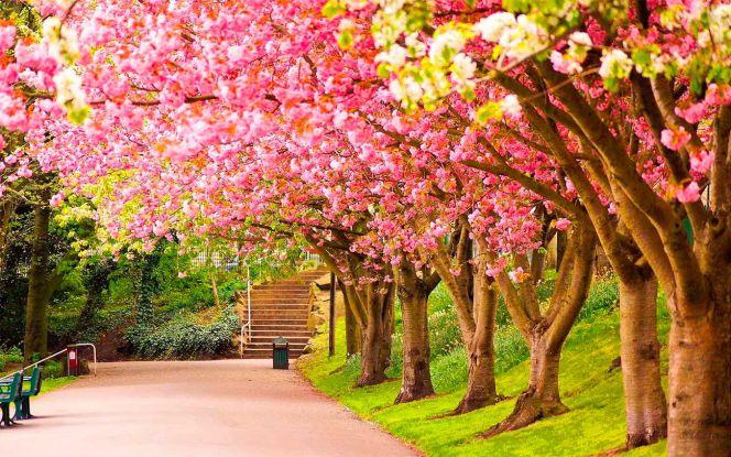 paisajes de primavera para fondo de pantalla hd