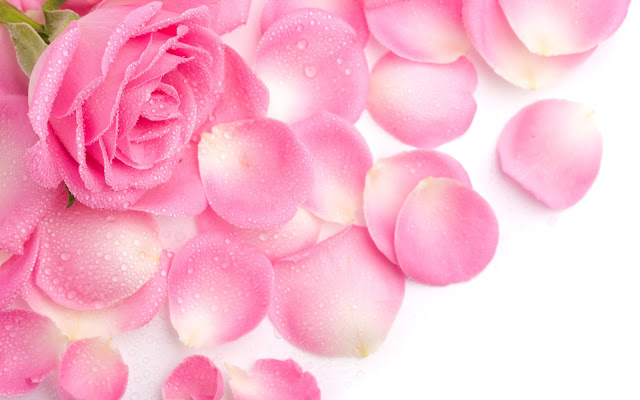 wallpapers de rosas hermosas
