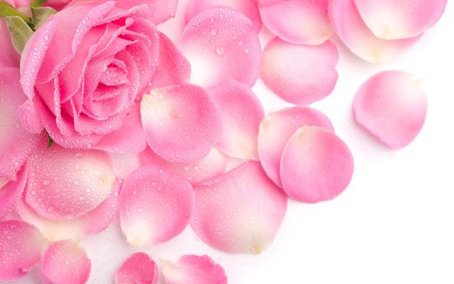wallpapers de rosas hermosas