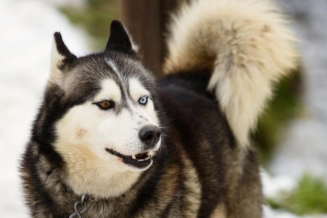 Fondos de lobossiberianos