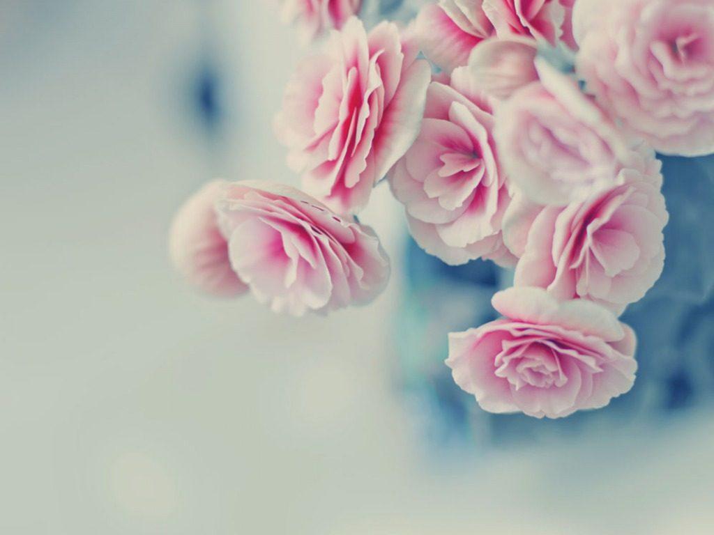 wallpaper full hd rosa