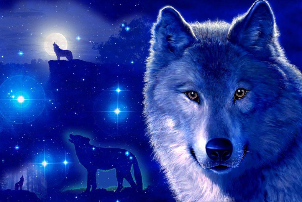 fondos de pantalla con movimiento de lobos