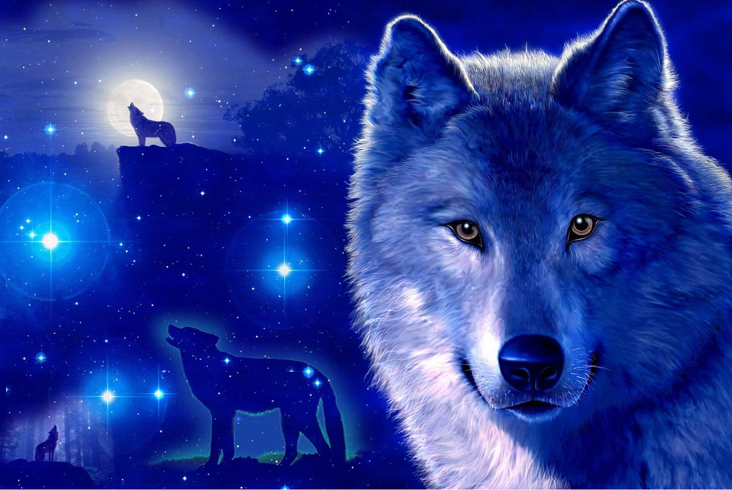 fondos de lobos con movimiento fondos de pantalla