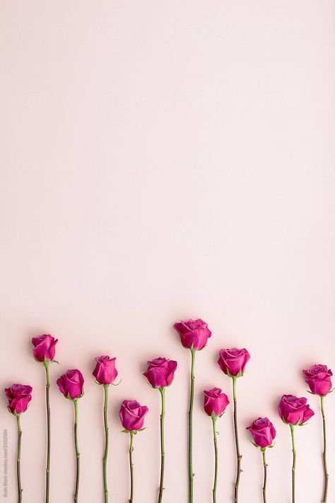 Wallpaper Rosas