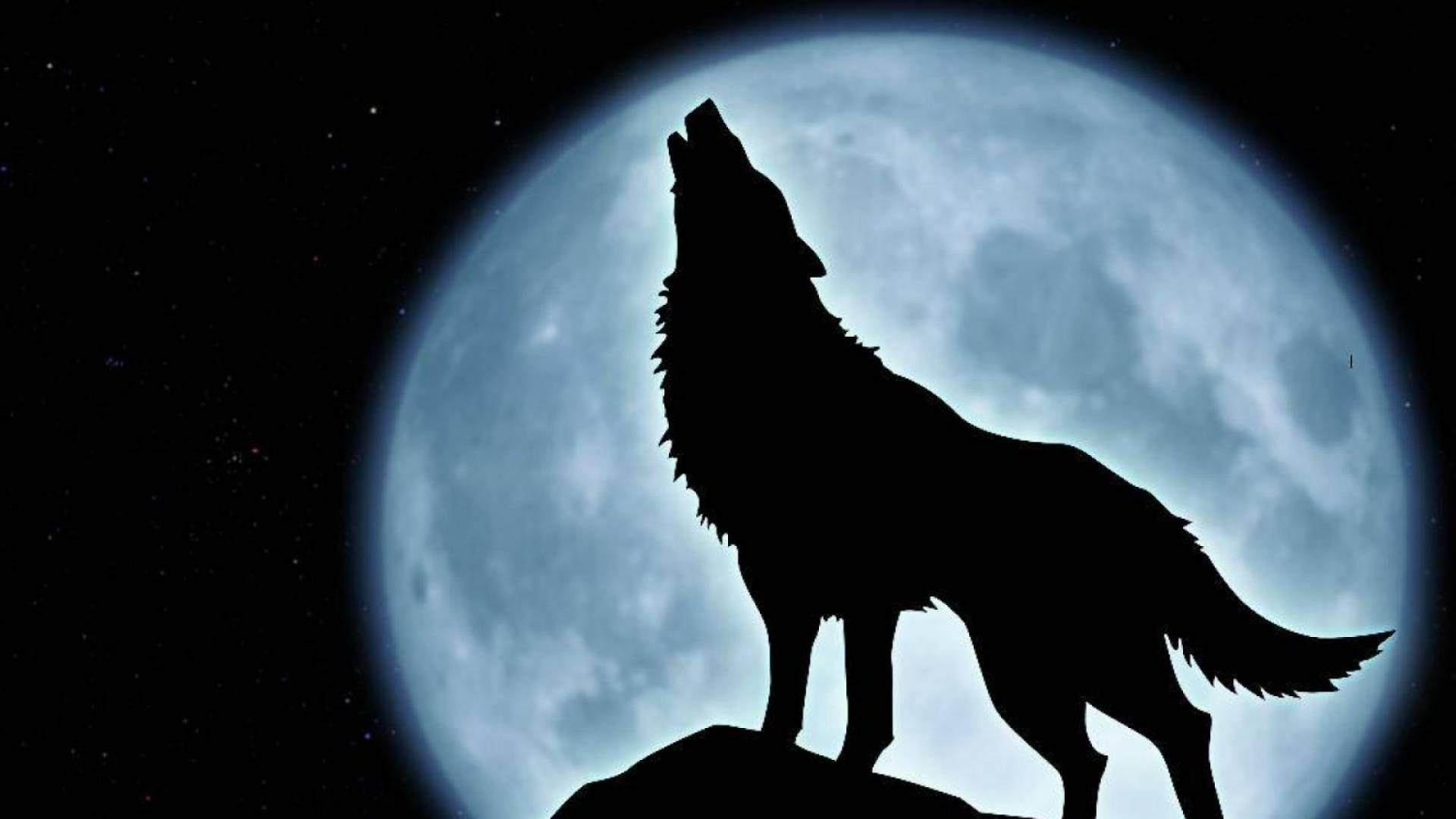Fondo de lobo aullando