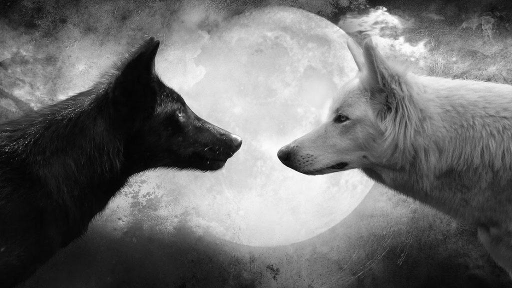 Fondo de lobos