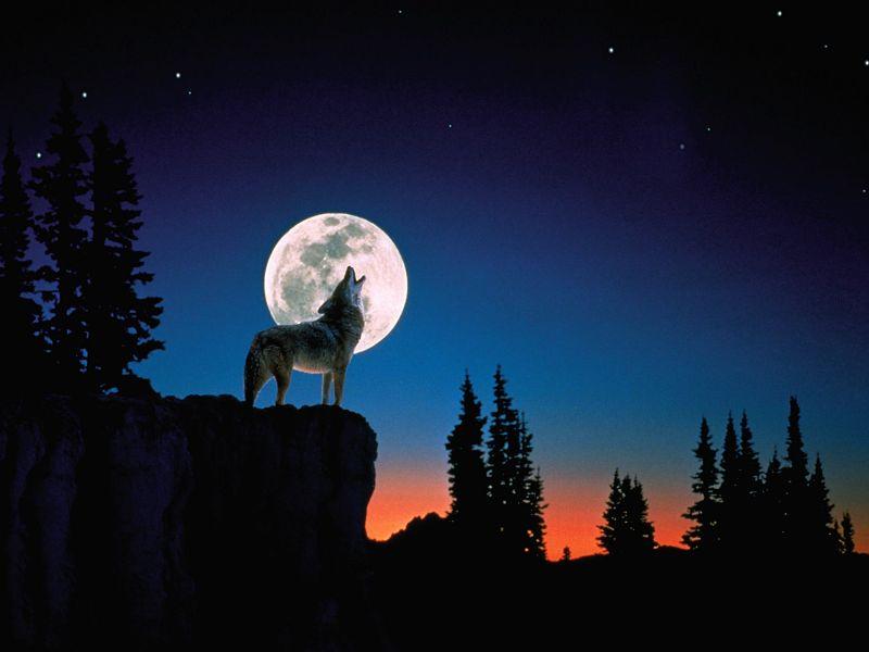 Fondos de pantalla de lobos aullando a la luna
