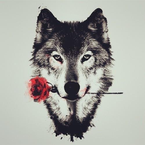 Fondo de lobo con rosa en la boca
