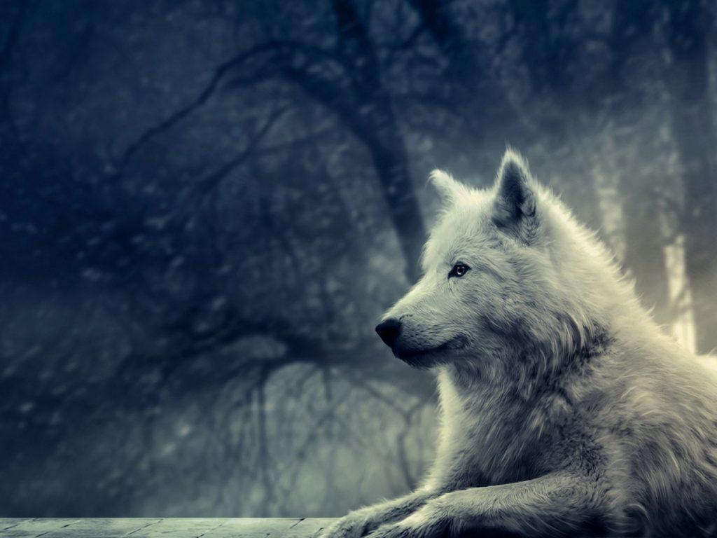 Fondos de pantalla lobos tumblr