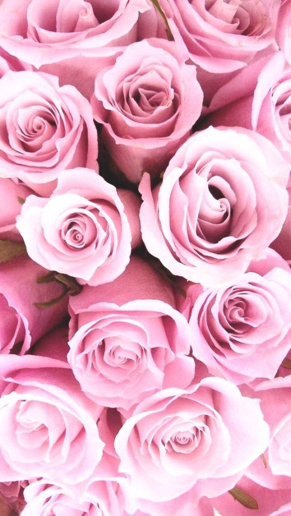 fondo de rosas rojas tumblr