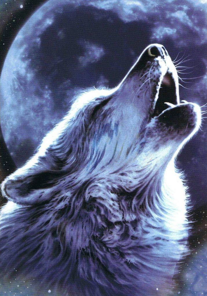 las mejores imagenes de lobos con indios