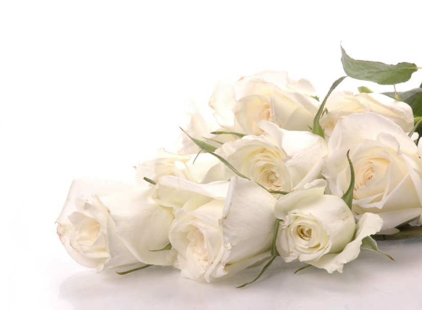 Wallpapers de rosas blancas