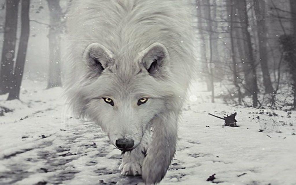 Fondo de pantalla lobos en movimiento