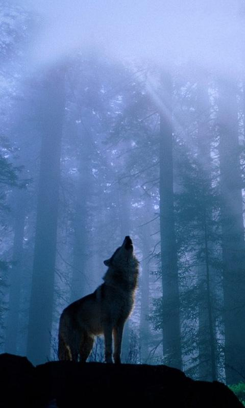 Fondos de pantalla de lobos hd fondos de pantalla for Imagenes wallpaper hd para celular