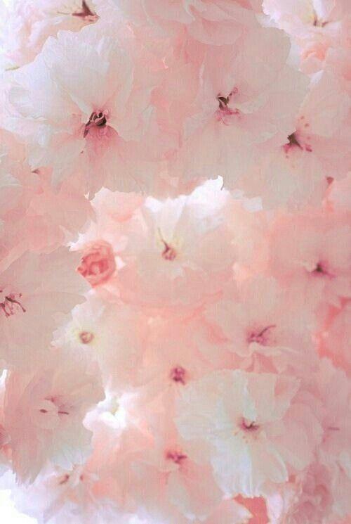 imagenes de fondos de pantalla color rosa pastel