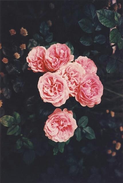 imagenes de fondos rosas tumblr