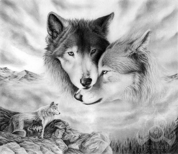 imagenes de lobos para perfil de facebook
