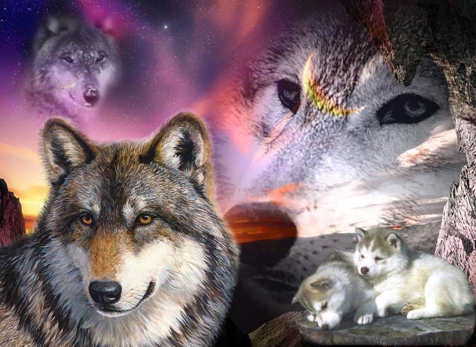 imagenes de lobos salvajes para descargar