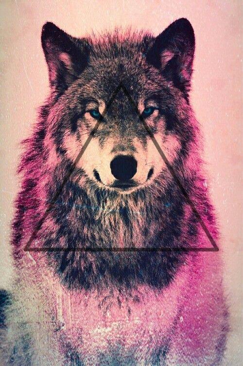 ver imagenes de lobos salvajes