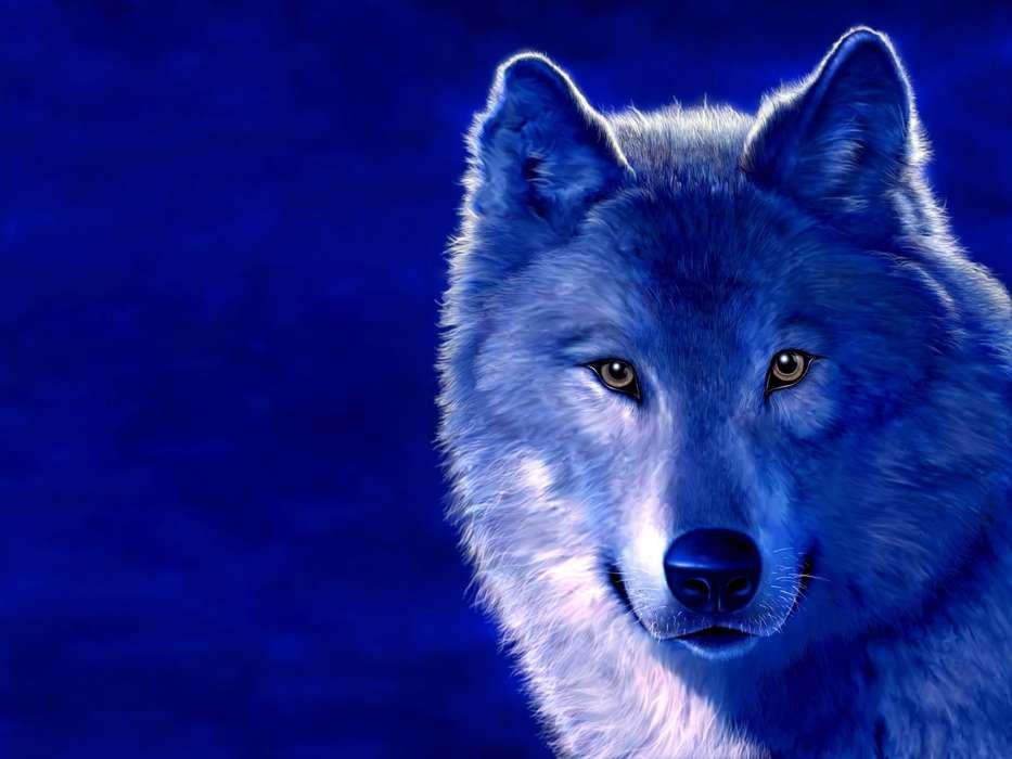 Descargarfondos de lobos