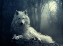 Fondos para escritorio de lobos