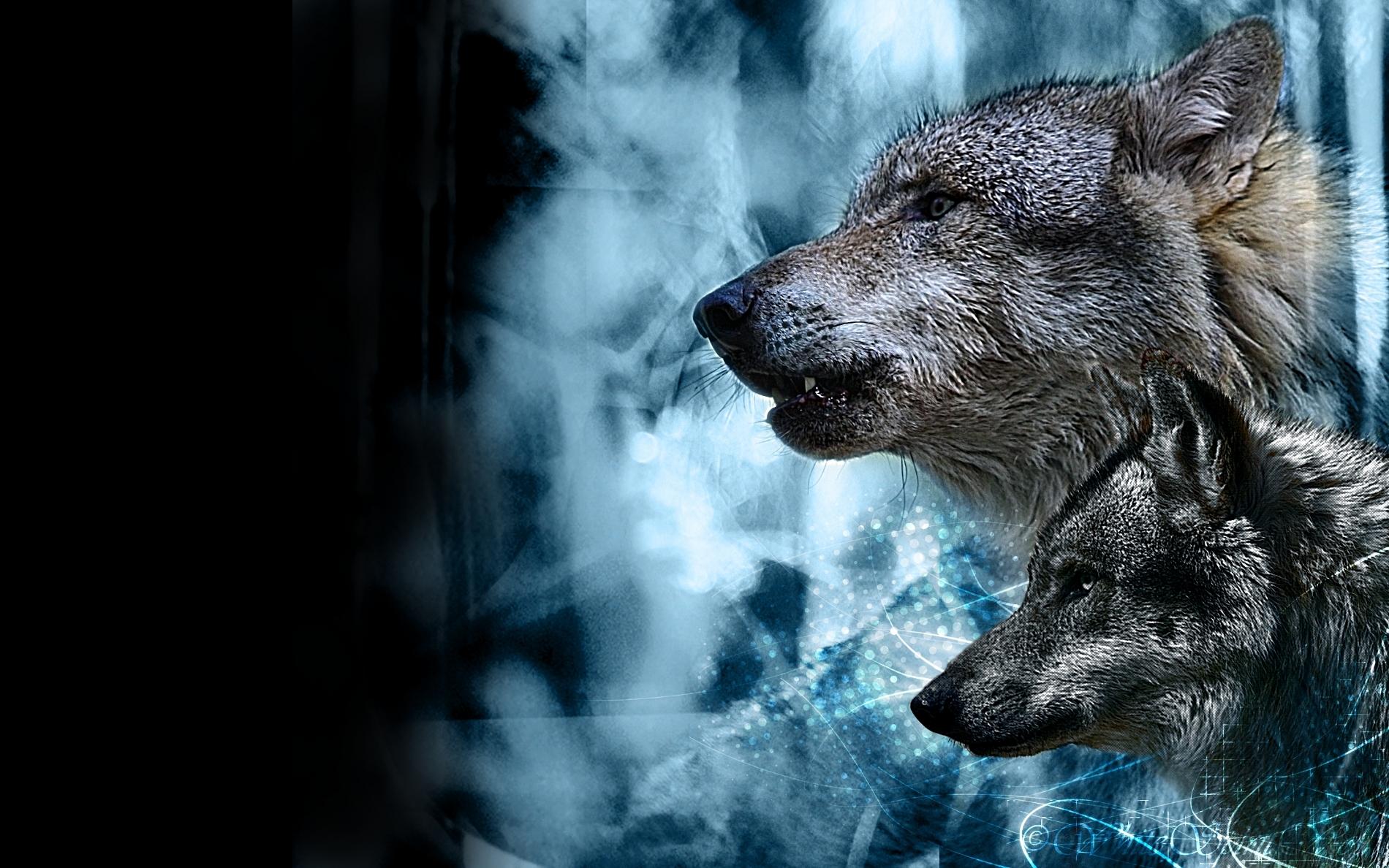 Fondos para escritorio de lobos fondos de pantalla for Imagenes para fondo de escritorio 3d