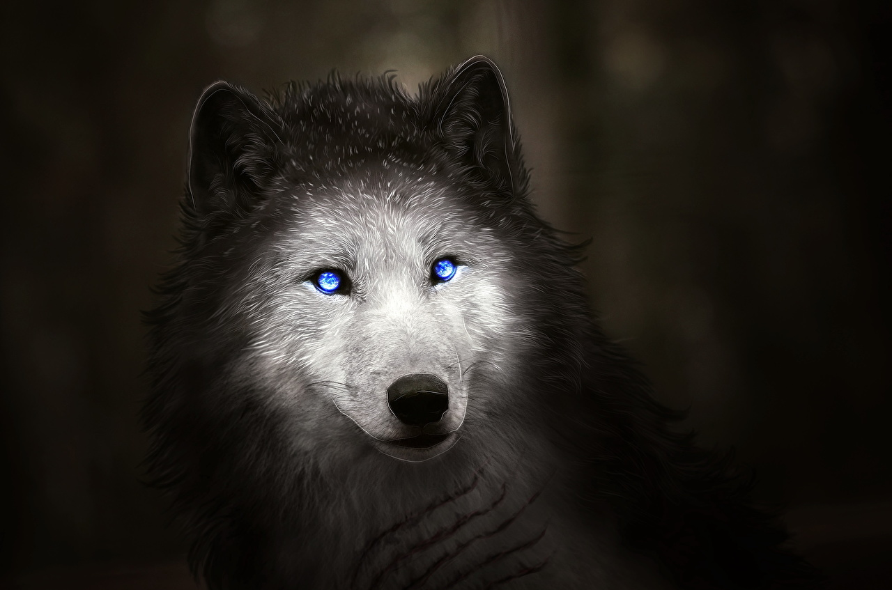 Imagenes De Lobo Para Fondo De Pantalla: 100 Fondos De Escritorio De Lobos