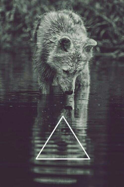 Imágenes de lobos para fondo de pantalla