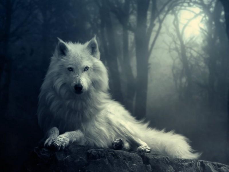 imagenes de lobos para fondo de pantalla con frases