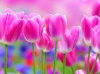 Wallpapers color rosa hd