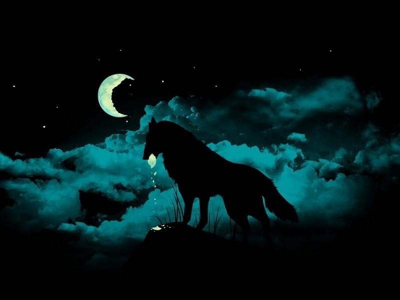 Fondos de escritorio de lobos gratis