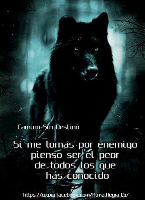 Lobo negro con frase