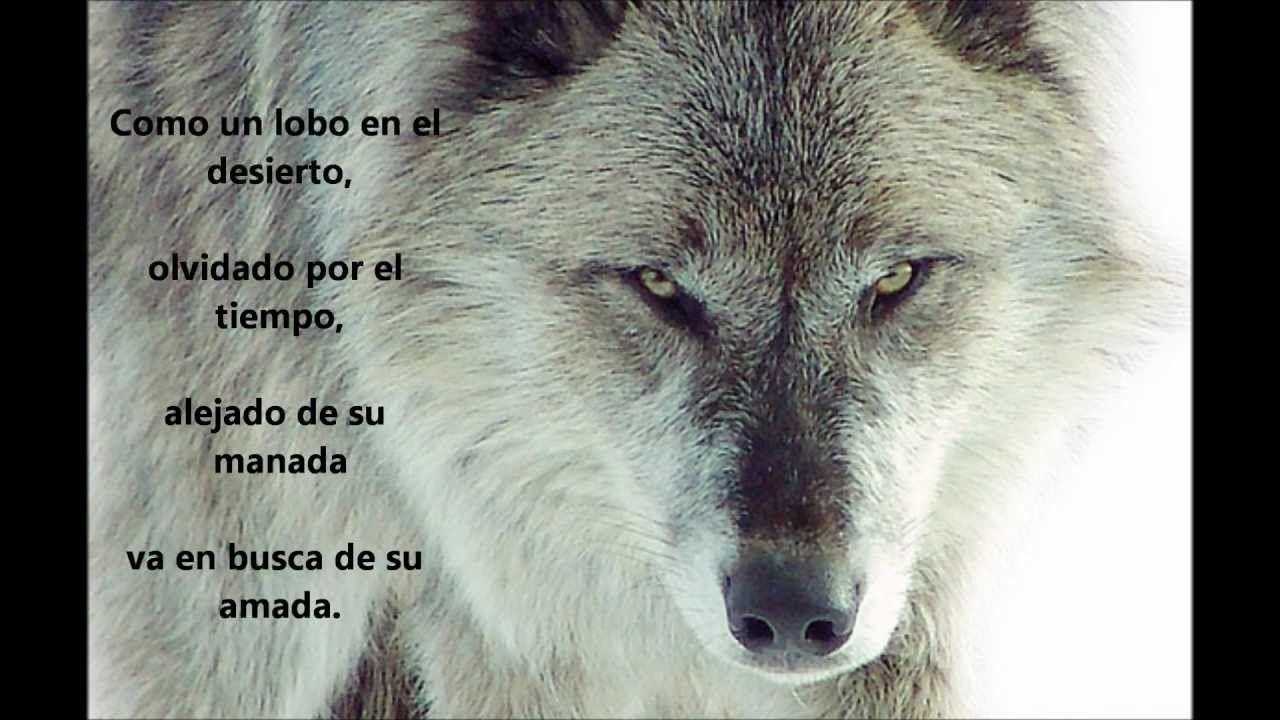 Fondo de un lobo