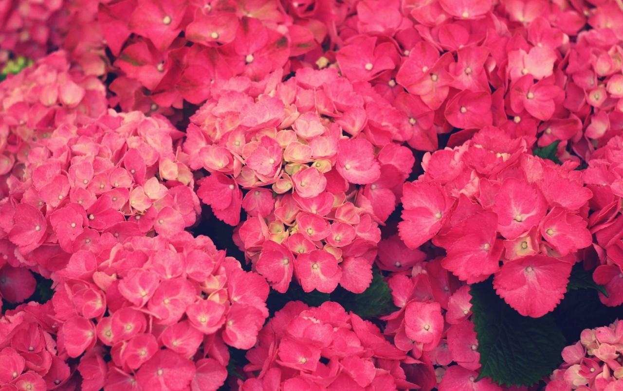 Mejores Wallpapers Color Rosa Hd Fondos De Pantalla