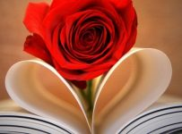 Wallpaper de rosas gratis