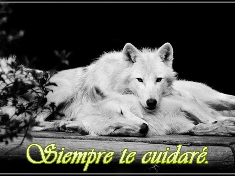 imagenes de lobos enamorados a lapiz