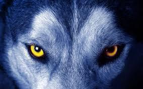 Lobo ojos