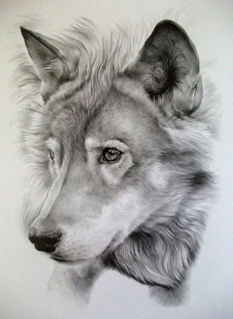 las mejores imagenes de lobos en hd