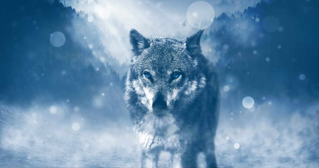 lobos wallpaper full hd