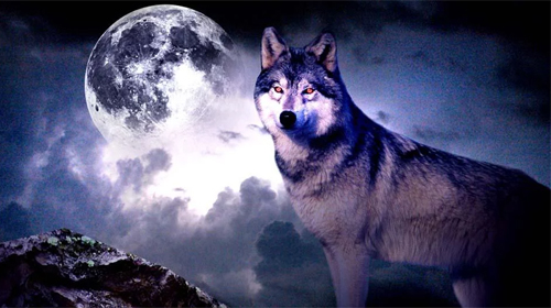 Fondos Animados Para Celular De Animales: Fondos De Escritorio HD Lobos