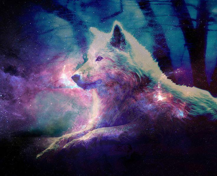 Imagenes De Lobo Para Fondo De Pantalla: Fondos De Escritorio HD Lobos
