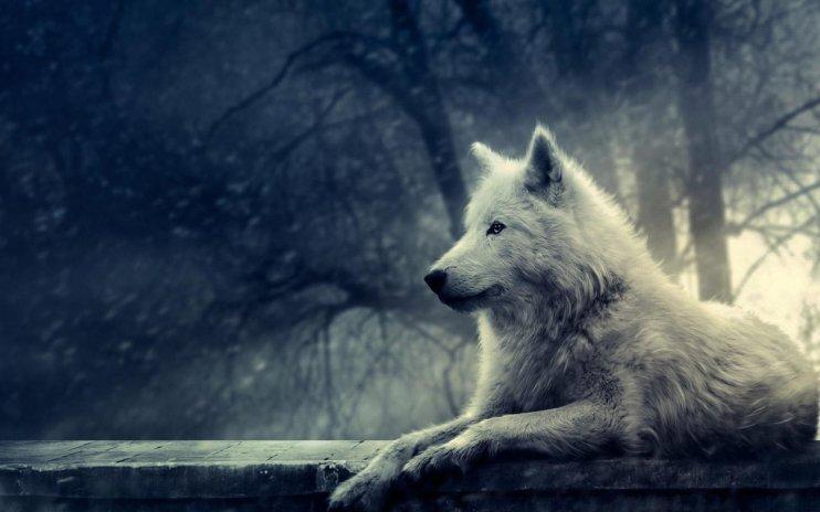 imagenes de lobos para fondo de pantalla hd
